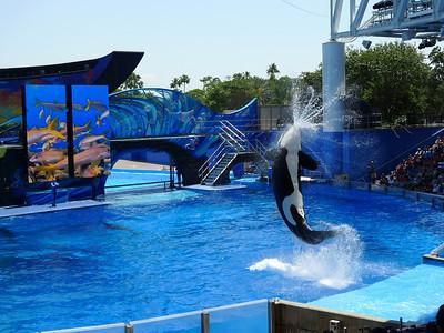Disney and SeaWorld May 2011