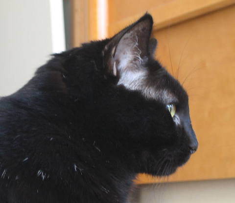 A profile shot of Kazon as he looks out the window (160_6019)