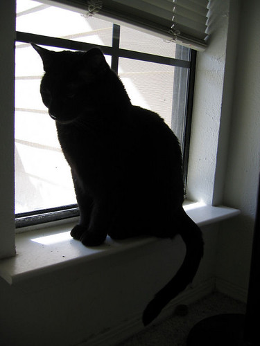 Kazon's silhouette as he sits in the window (175_7508)