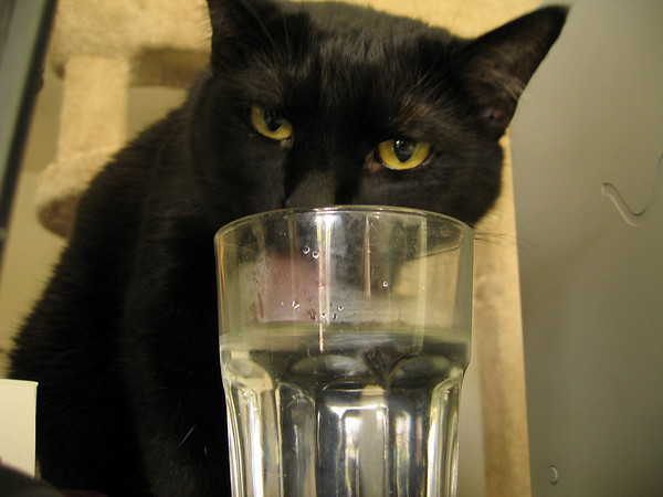 Kazon taking a drink from my glass of water (190_9039)