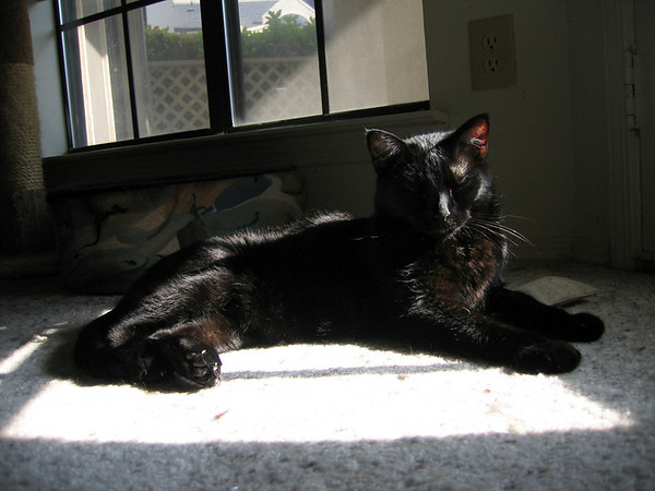 Kazon lying in a sunbeam (191_9116)