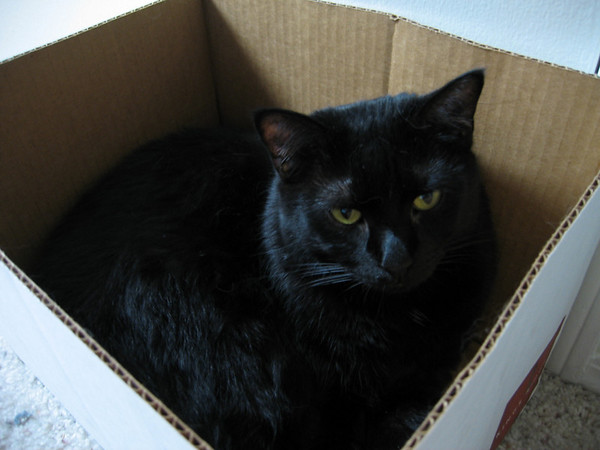 Kazon in a box (211_1148)