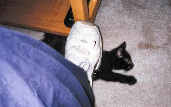 "<a href=""http://xenogere.com/kazon-the-kitten/"" title=""Kazon the kitten"">Blog entry</a>"