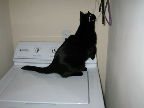 "<a href=""http://xenogere.com/laundry-day-with-kazon/"" title=""Laundry day with Kazon"">Blog entry</a>"