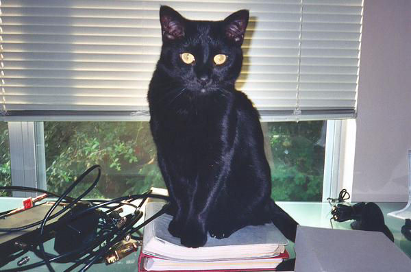 """<a href=""""http://xenogere.com/panther-kitty/"""" title=""""Panther Kitty"""">Blog entry</a>"""