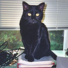 "<a href=""http://xenogere.com/panther-kitty/"" title=""Panther Kitty"">Blog entry</a>"