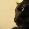 """<a href=""""http://photos.xenogere.com/photo/139/"""">Blog entry</a>"""