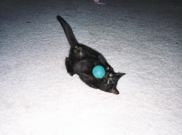 Kazon playing with a ball (kazon05)