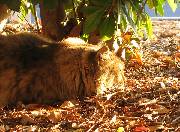 Larenti sleeping on a bed of fallen leaves as the setting sun shines on his face