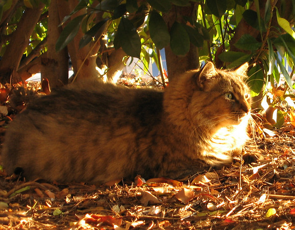 Larenti lying on a bed of fallen leaves as he casts his gaze in my direction