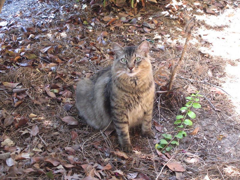 """<a href=""""http://xenogere.com/another-of-the-neighborhood-cats/"""" title=""""Another of the neighborhood cats"""">Blog entry</a>"""