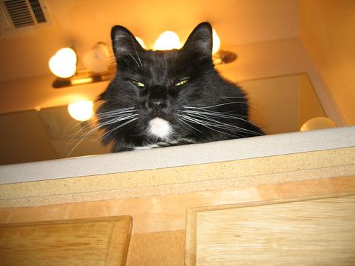 Loki looking over the edge of the bathroom vanity (111_1191)