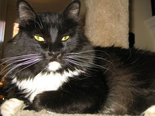 Loki resting on the cat castle (119_1951)
