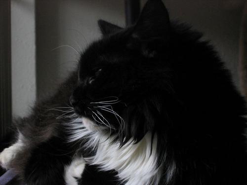 Loki resting next to the window (148_4879)