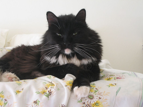 Loki falling asleep on the bed (155_5540)
