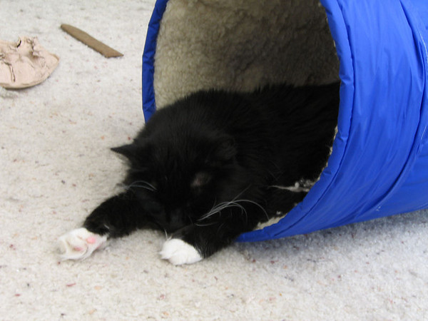 Loki sleeping in the cat tunnel with his front half splayed out on the floor (184_8445)