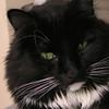 "<a href=""http://xenogere.com/lokis-magic/"" title=""Loki's magic"">Blog entry</a>"