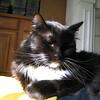 "<a href=""http://xenogere.com/2008/09/22/familiars/"">Blog entry</a>"