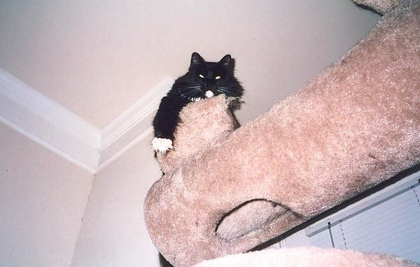 Loki atop the cat castle (loki11)