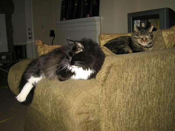 Loki and Grendel (left to right) hanging out on the back of the love seat. (110_1010)