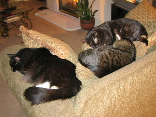 (left to right): Loki, Grendel, and Kako sleeping on the couch (110_1075)