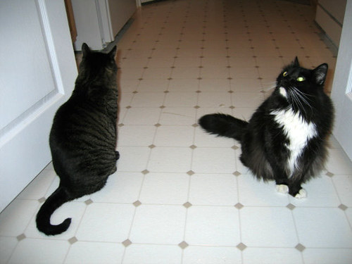 Grendel and Loki sitting in the kitchen looking in opposite directions (114_1418)