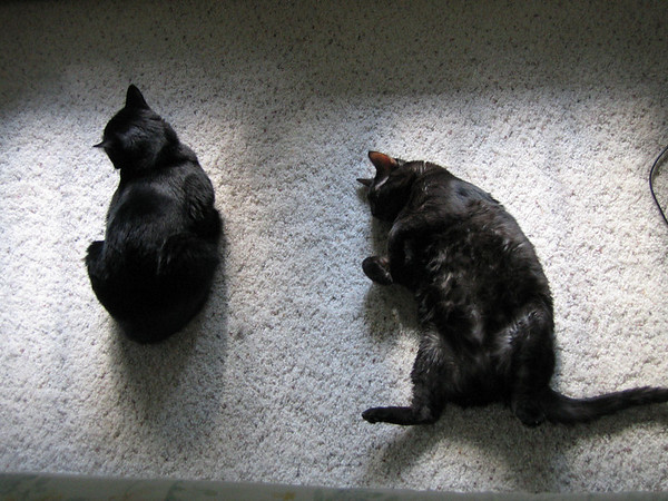 Kazon and Kako lying in the remains of the sunlight (141_4122)