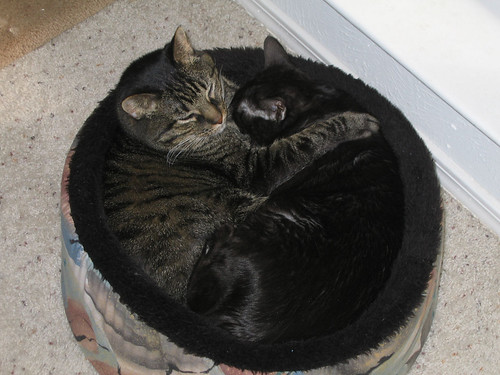 Grendel and Kako snuggling with each other in the cat bed (142_4282)