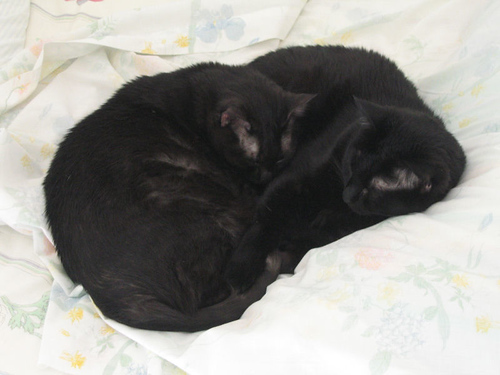 The Twins, Kako and Kazon, sleeping together on the bed (143_4308)