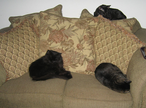 Vazra, Grendel, and Kako sleeping on the love seat (151_5105)