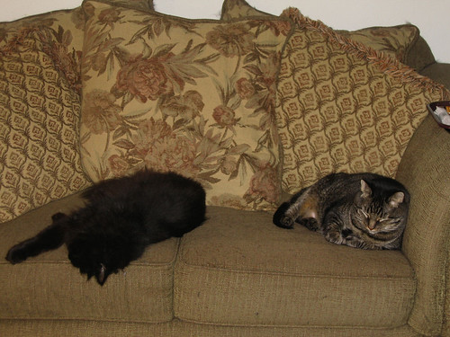 Vazra and Grendel sleeping on the love seat (151_5127)