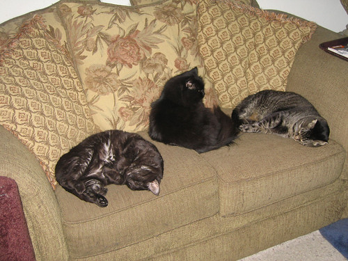 Kako, Vazra, and Grendel sleeping on the love seat (151_5197)