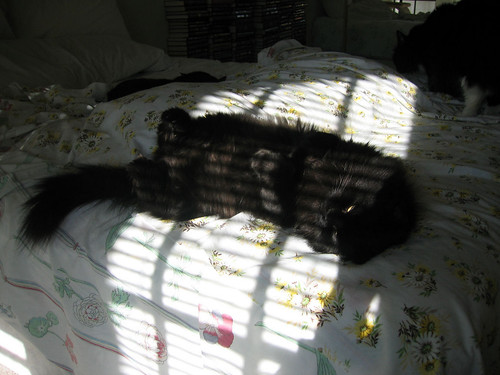 Vazra lying on his back on the bed with sunlight shining on him through the blinds (155_5516)