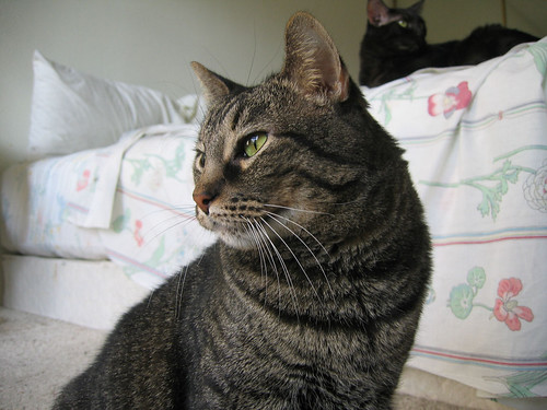 Grendel in soft light as he looks out the window with Kako on the bed behind him (160_6011)