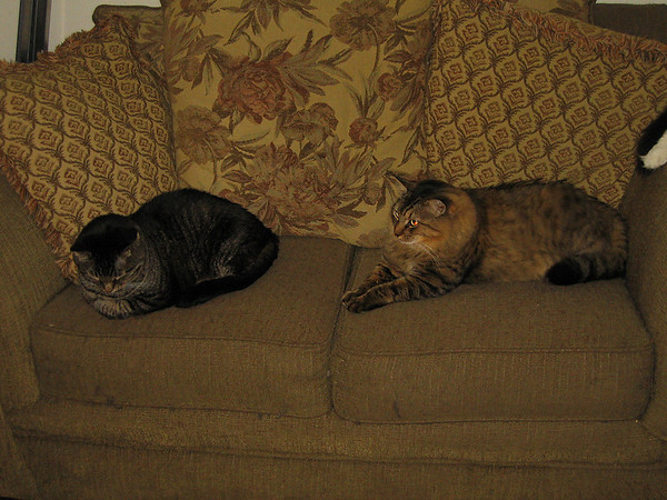 Grendel lying on the love seat with Larenti