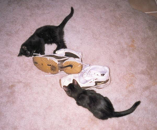 """<a href=""""http://xenogere.com/gather-kittens-while-you-may/"""" title=""""Gather kittens while you may"""">Blog entry</a>"""