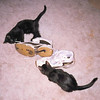 "<a href=""http://xenogere.com/gather-kittens-while-you-may/"" title=""Gather kittens while you may"">Blog entry</a>"