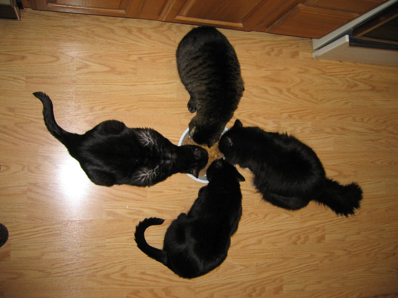 "<a href=""http://xenogere.com/the-great-feline-pinwheel-galaxy/"" title=""The Great Feline Pinwheel Galaxy"">Blog entry</a>"