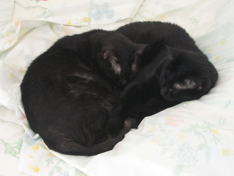 "<a href=""http://xenogere.com/unusual-bedfellows/"" title=""Unusual bedfellows"">Blog entry</a>"