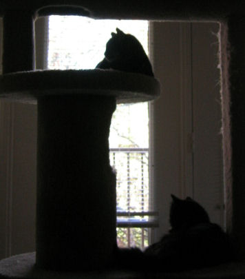 Silhouettes of Grendel and Loki lying on different levels of the cat castle