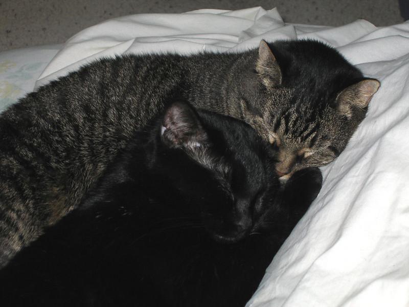 """<a href=""""http://xenogere.com/a-moment-of-stepbrother-zen/"""" title=""""A moment of stepbrother zen"""">Blog entry</a>"""