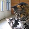 """<a href=""""http://photos.xenogere.com/photo/87/"""">Blog entry</a>"""