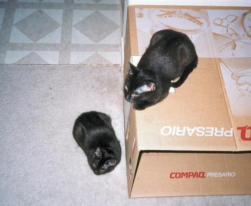 Kako lying on the box and Kako lying beside the box (the_twins_07)