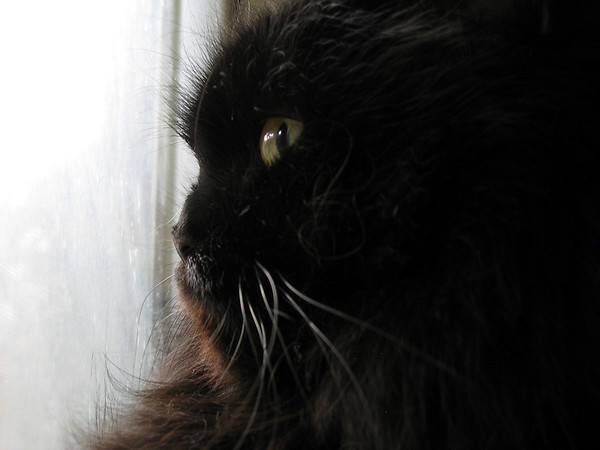 A close-up of Vazra as he gazes out the window on a cloudy day
