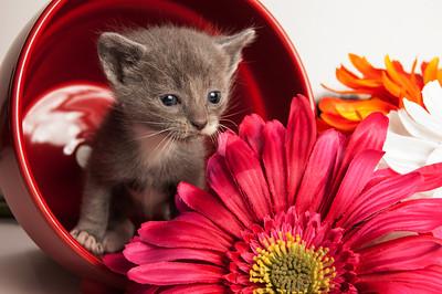 Hmmmmmm...Smell the Flowers?