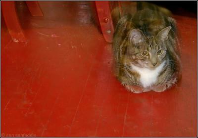 Kitty Corner