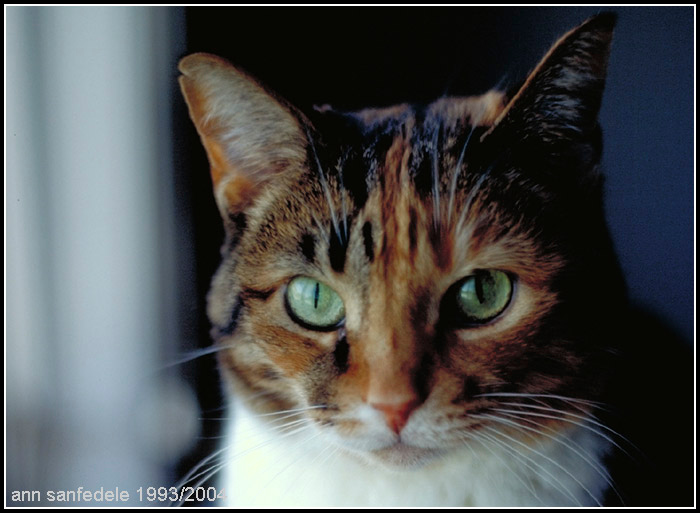 Racquel, Calico cat