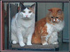 Un, deux, trois, Frank's cats