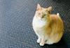 fish store cat