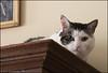 Lulu on the Shelf